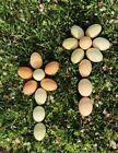 12 + Barnyard Mix, Organic, Fertile, Healthy Chicken Eggs for Hatching