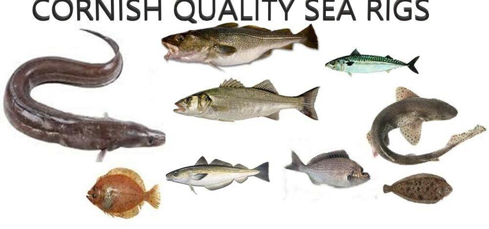 cornish-quality-sea-rigs