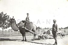 WWII Org German RP- Soviet Union- Russian Middle East- Civilian- Camel- Wagon