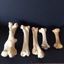 Animal Bones Skeleton Bones Craft Carving Natural Garden Halloween Scary