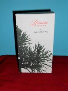 New in Box Japanese Black Pine Tree Bonsai Grow Kit cr
