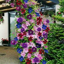 100pcs 24 Color Mixed Clematis Climbing Plants Seeds Flower Garden Decor