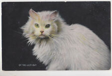 "Vintage Cat Postcard,Beautiful White Cat,""On the Look Out"",Used,U.K.1908"