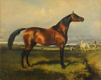 """high quality 36x24 oil painting handpainted on canvas """"horse""""N8305"""
