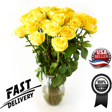 Fresh Yellow Roses Flower Bouquet 12 Roses Long Stem -Luxury & Fresh Roses - Usa