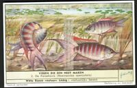 Nesting Fish Paradise Gourami  60+ Y/O Vintage Trade Ad Card