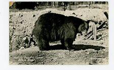 Native Pacific Coast Black Bear RPPC Vintage California Photo ca. 1940s