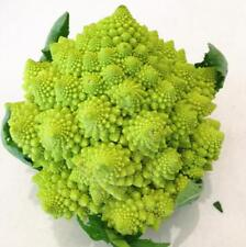 10 pcs Imported Roman Cauliflower (Brassica oleracea) F1 hybrid vegetable seeds