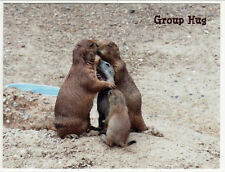 Prairie Dogs Group Hug at Baltimore Zoo Md Postcard