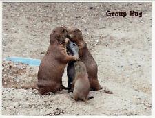Prairie Dogs Group Hug at Baltimore Zoo MD Postcard