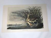 John James Audubon Folio Plate 182 Long-Billed Curlew Limited 750