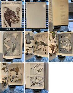 1974 Royal Academy Of Arts Exhibition Catalogue Plates Bird Drawings Tunnicliffe