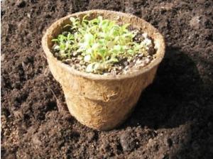 Biodegradable Midi Plus Coir Pots 12cm x 10cm depth plant seed seedling pots x15