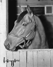 Champion Racehorse SEABISCUIT Glossy 8x10 Photo Thoroughbred Print Poster