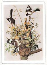 The Mockingbird -1979 Beautiful Colour Vintage Bird Print by John James Audubon