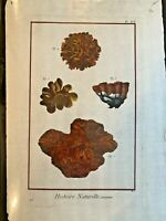 1751 DIDEROT Antique Folio Hand Colored Engraving Coral Sealife #91