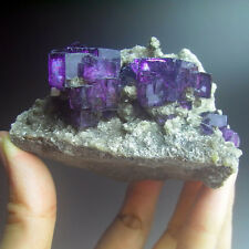 Pair of High Intensity Purple Terraced Cubic Fluorites on Mica, YaoGangXian Mine
