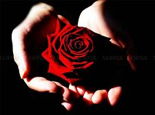 FLOWERS NATURE PLANT FLOWER RED ROSE BEAUTIFUL ROMANCE POSTER ART PRINT BB3028A