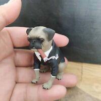 1/6 Astoys AS032 Pug Dog & Cigar Set MIB Frank The Pug Model Figure Toy