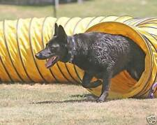 Tough Vinyl Dog Agility Equipment 15'  Tunnel