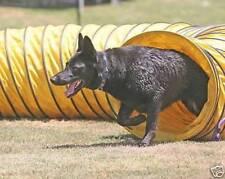 Tough Vinyl Dog Agility Equipment 15'  Tunnel