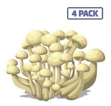 Mushrooms White Enoki Fungus Fungi Vegetables Fresh Sticker Vinyl Decal 1-063