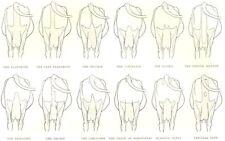 COWS. Guenon System; Flandrine; Selvage; Curveline; Bicorn; Demijohn; Thigh 1912
