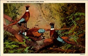 Postcard Chinese Pheasants Northwest Game Birds Portland Oregon
