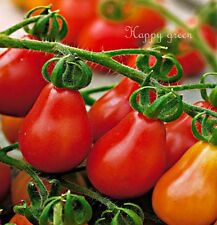 TOMATO - RED PEAR - Cherry bell - 120 SEEDS