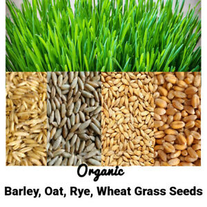 10g-1kg Organic Wheatgrass Barley Oat Rye Seeds For Sprouting & Juicing Free P&P