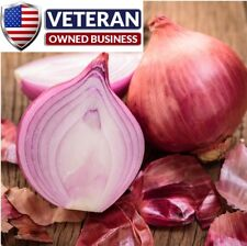 Onion seeds Red Burgundy 600+ Non-GMO and Heirloom vegetable seeds