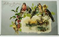 Christmas Pretty Birds Perched Above Picturesque Snow Scene Embossed Postcard I6