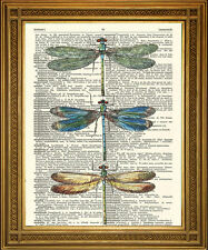 """DRAGONFLY ART: Vintage Dictionary Print, Winged Insects on ANTQUE Paper (8x10"""")"""