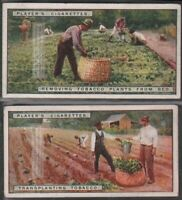 Transplanting Tobacco Seedling To The Field Two 90+ Y/O Trade Ad Cards