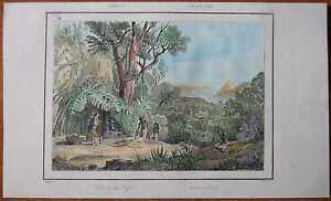 1837 print COFFEE HARVEST IN BRAZIL (#15)
