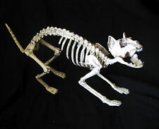 Scary Skeleton Cat Zombie Haunted House Halloween Party Decoration Prop 22""