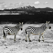 GILLIE AND MARC-direct from the artists-authentic photography print Zebra Africa