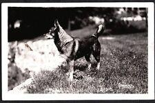 Vintage Rppc 1939 Norwegian Elkhound Dog Coulee Dam Washington Photo Postcard