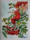 ACEO PRINT Limited Edition Mountain Ash Fairy Nature by Anna Lee FIRST of 25