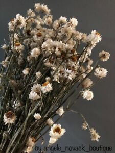 "80GR DRIED WEDDING FLOWERS BUNCH AMMOBIUM ALATUM ARRANGEMENT DECORATION 16"""