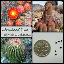 20+ MEXICAN FIRE BARREL CACTUS SEEDS (Ferocactus pilosus) Lime Cacti Desert