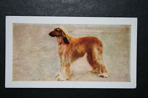 Afghan Hound   Vintage Colour Photo Card # Excellent Condition
