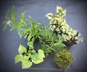 Pflanzenset für Teich und Insel - Set 2  mit 6 verschiedenen Pflanzen