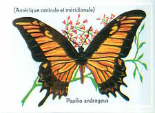 IMAGE CARD 60s PAPILLON INSECTE BUTTERFLY PAPILIO ANDROGEUS LEPIDOPTERE Cochrus