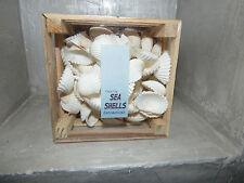 Muscheln Dekoration Muschelbox Bastelmuscheln