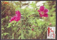 2006 Bulgaria Flora Roses Red Rosa Pendula Maxicard