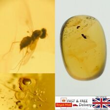 More details for unique insect and air bubble in cretaceous burmese amber fossil 1.88g *581