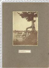 Photo coloniale Françaises. Soudan. Racines d'arbres. Vers 1925