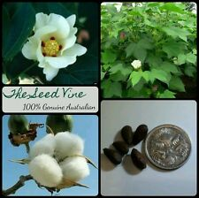 10 COTTON SEEDS (Gossypium Hirsutum) Fast Growing Flowering Annual Bush