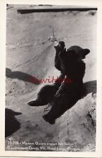 Postcard Rppc Bear Madam Queen cares her likker Government Camp Mt Hood Or